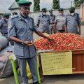 The Nigeria Customs Service, Federal Operations Unit, Zone 'C' Owerri, has intercepted 5,200 live ammunition, Conquest Online Magazine